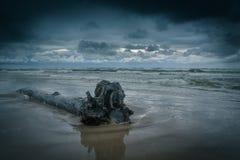 Log da água Imagem de Stock