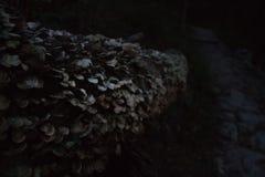 Log da árvore com cogumelos Fotografia de Stock Royalty Free
