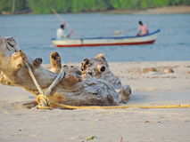 Log da madeira na praia Fotografia de Stock Royalty Free