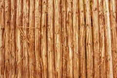 Log de madeira Imagem de Stock
