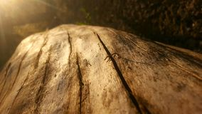 Log de madeira Fotos de Stock Royalty Free