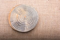 Log de madeira cortado em partes finas redondas Fotografia de Stock