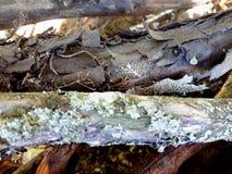 Log de madeira Detalhes de madeira da casca Textura fotografia de stock royalty free
