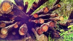 Log deck. Douglas fir logs on a deck in a firewood lot Royalty Free Stock Photography