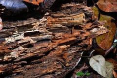 Free Log Detail Stock Images - 103028794
