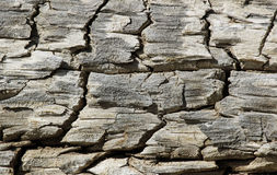 Log Detail Royalty Free Stock Photography