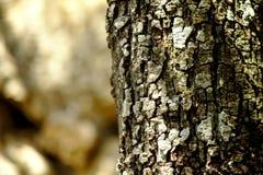 Log do carvalho de pequena ilha Imagens de Stock