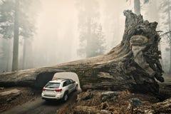Log do túnel, parque nacional de sequoia, EUA fotografia de stock