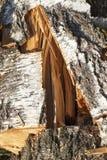 Log do vidoeiro imagens de stock