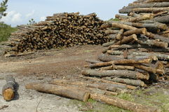 Log Dump. Timber extraction at Sado River estuary, Alcacer do Sal,southern  Portugal,E.U Stock Photos