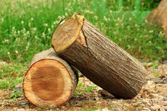 Log en bois photo libre de droits