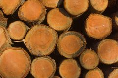 Log ends Stock Images