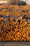 Log Ends Wood Rounds Cut Measured Tree Trunks Lumber Mill. Wood already taken from the forest waits for transport Stock Photography