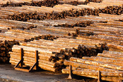 Log Ends Wood Rounds Cut Measured Tree Trunks Lumber Mill. Wood already taken from the forest waits for transport Royalty Free Stock Photos