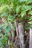 Log fence embedded in the ground. Rustic motifs royalty free stock photo