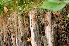 Log fence embedded in the ground. Rustic motifs stock images