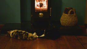 Log fire and cats stock video