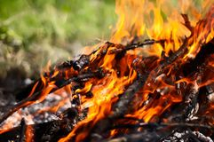 A log in the fire Royalty Free Stock Image