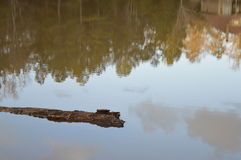 Log Floating in Lake Stock Photo