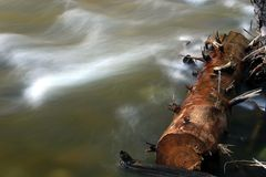 Log and Flowing River. In Yosemite Stock Photography