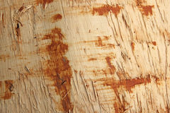 Log in forest Stock Photos