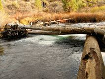 Log Formation. Logs on Tumalo Creek in Shevlin Park - near Bend, OR Royalty Free Stock Image