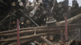 Log grappler getting pieces of logs from truck. Deforestation for Industrial production, mechanical gripper unloading