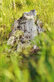 Log in Grass Stock Images
