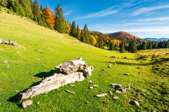 Log on a grassy hill in Apuseni Natural park. Mountain with deciduous forest in yellow foliage in the distance. beautiful autumn landscape of Romania Stock Photos