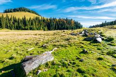 Log on a grassy hill in Apuseni Natural park Stock Images