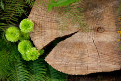 Log and green foliage Royalty Free Stock Photography
