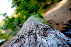 Log in the ground Royalty Free Stock Photography