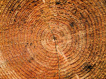 Log growth rings Royalty Free Stock Photography