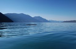 Log on Harrison Lake. Kayaking in the morning on Harrison Lake, July 1, 2013, BC, Canada Royalty Free Stock Photos