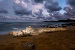 Log on Hawaiin beach Stock Photo