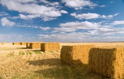 log hay square Zdjęcie Stock
