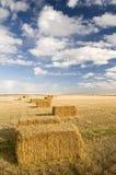log hay square Zdjęcia Stock