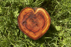 Log heart. Heart shaped apple tree log between grass shot with sunlight stock images