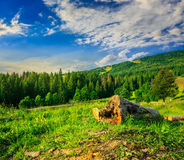 Log on a hillside near the  forests Stock Photography