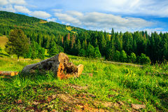 Log on a hillside near the  forests Royalty Free Stock Image