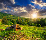 Log on a hillside near the  forests at sunset Stock Photos