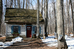 Log house and maple trees with pail. Old log house among maple trees with pails for collecting sap for maple syrup royalty free stock photos