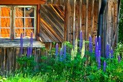 Log house stock photography