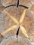 Log house trunk. Wood texture royalty free stock photography