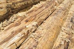 Log house wall, diagonal view Royalty Free Stock Image
