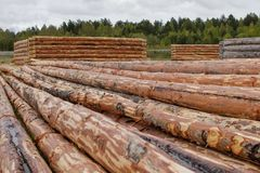 Log houses from pine logs in the meadow. Logs cleared of bark royalty free stock image