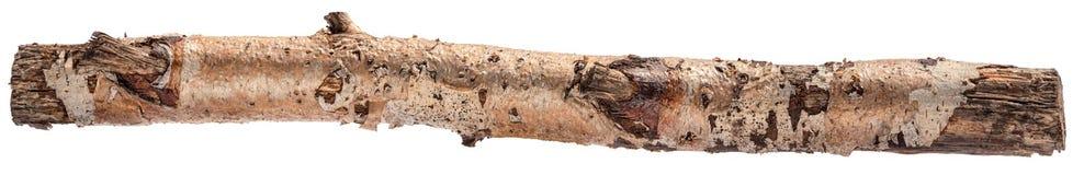 Log isolated. One birch log isolated on white background stock images