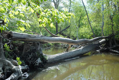 Log Jam. Image of a log jam in a river Stock Image
