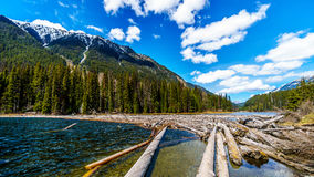 Log jam at the north end of Duffey Lake Royalty Free Stock Image