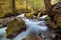 Log Jam at Panther Creek. Falls in Gifford Pinchot National Forest Washington State Royalty Free Stock Images